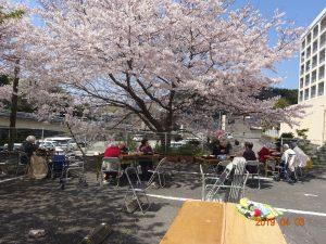 駐車場で花見【平成31年4月3日(水)】