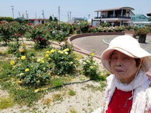 バラ公園へドライブ【2019年6月5日(水)】